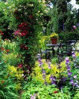 View to table and seats, Clematis and Lonicera on pergola
