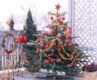 Decorated christmas tree on balcony, appleswith red ribbons and garlands of orange slices