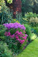 Summer border with Phlox paniculata in July