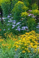 Summer border with Aster x frikartii 'Monch', Rudbeckia 'Goldsturm', Crocosmia 'George Davison', Echinacea purpurea and Solidago canadensis in August.