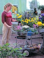 Woman buying spring flowers in the garden center - Ranunculus, Pulmonaria, Arabis, Viola cornuta, metal watering can and sack of compost
