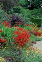 Red hot border with Crocosmia, Cercis Buddleja and Arctotis. Billowing generous planting. Similar design to red garden at Hidcote