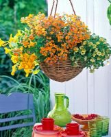 Hanging basket with Nemesia 'Orange', Tropaeolum and Calibrachoa Celebration 'Sun'