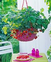 Fragaria - strawberries in pink hanging basket