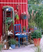 Salvia patens, Carex, Miscanthus, Thymus, Dichondra and Hedera in pots. Fruit crates used as shelves with blue chair infront of red painted wooden wall with sea shells and other found maritime objects.