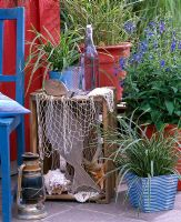 Carex morrowii 'Variegata' and Salvia patens in pot. Fruit crate decorated with found maritime objects, wooden fish, shells, starfish and nets.