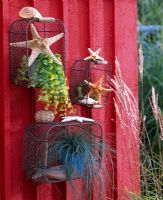 Wire baskets used as shelves attached to red painted wooden walls with Lysimachia nummularia and Festuca cinerea in pots decorated with starfish and shells.