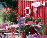 Terrace with red pained wooden walls and pots with Dahlia, Pelargonium, Argyranthemum, Calibrachoa and Petunia.