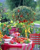 Lycopersicon 'Tumbler'- tomatoes in hanging basket and bowls with different tomato varieties, Capsicum 'Pinokkio' and Phaseolus on table on balcony.