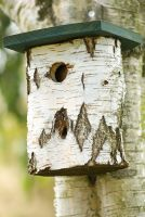 Birch bird nesting box