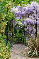 Wisteria sinensis climbing over colonnade, Clematis montana, Phormium 'Sundowner' and Hosta 'Halcyon' - The Garden of Rooms at RHS Wisley