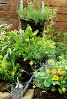 Herbs growing in wicker baskets with two tied on to a ladder to make use of vertical space. Sorrel, summer savory, chervil, thyme, Vietnamese coriander, golden feverfew, golden marjoram, curry plant, Calendula and sage