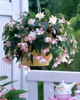 Begonia Belleconia 'Rose' in a hanging basket above a balcony and table