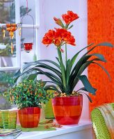 Jacobinia and Clivia on window sill with books, glasses and hanging tealights