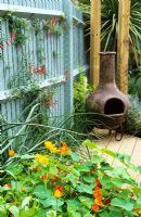 The 'hot' patio area with Tropaeolum, Calendula, Eccremocarpus scaber and a chiminea
