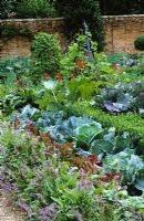 The Potager at West Green House garden -  Cerinthe major 'Purpurascens' and Brussel sprout 'Rubine' with cabbages and lettuces