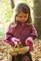 Little girl in the woods collecting Castanea sativa - Sweet Chestnuts in a basket in Autumn