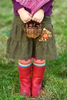 Little girl holding a basket of Sweet Chestnuts