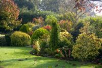 Acid loving planting with Conifers, Acers and Sumach