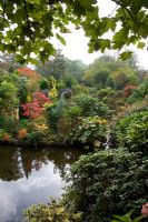 Autumnal colours of - Sumach, Hydrangea prezoia, Ulmus aurea, Acacia, Cotinus 'Grace', conifers and rhododendrons surrounding a pond