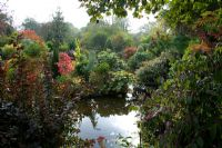 Autumnal colours of - Sumach, Hydrangea, Ulmus aurea, Acacia, Cotinus 'Grace', conifers and rhododendrons surrounding a pond