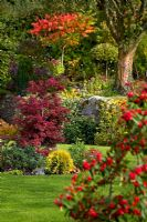 Autumnal colours of - Sumach, Hydrangea prezoia, Ulmus aurea, Acacia, Cotinus 'Grace', conifers and rhododendrons