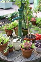 Mixed vegetables planted in terracotta pots standing on old water pump, Maja's garden for children, Sofiero Castle, Sweden
