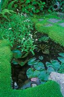 Small garden pond with Soleirolia soleirolii and Nymphaea
