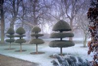 Topiary covered with heavy frost