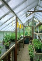 Greenhouse interior with bubble wrap for shading and insect traps