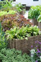 Salad leaves and vegetables growing in raised wicker beds
