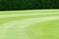 A perfect lawn with mown stripes backed by a Taxus hedge