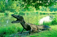 Crocodile beside lake in private garden- Artist Sophie Huges, Oxon