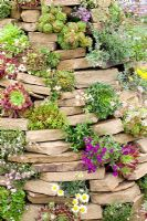 Rock-garden made from pile of stones with succulents and alpines