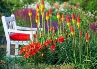 Lilium asiaticum 'Red Dwarf' and Kniphofia uvaria in border with white wood armchair behind
