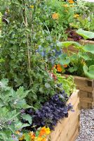 Potager style raised beds with Tomatoes, Herbs, Aubergine and Squash - The Homebase Room with a View Garden - Hampton Court Flower Show 2008