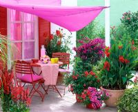 Red table and chairs on patio with pink canopy and containers of Canna, Bougainvillea, Rosa, Petunia and Lobelia 'Fan Scarlet'