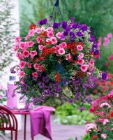 Hanging basket with Petunia 'Strawberry Frost', Petunia calimero 'Blue', Verbena and Scaevola