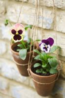 Pansies in hanging terracotta pots with home made twine hangers, against old brick wall
