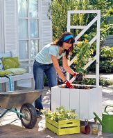 Woman planting Thunbergia and Petunia into wooden planter