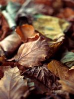 Leaf litter in autumn