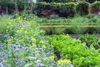 Vegetable garden with rows of green manures - Phacelia tanacetifolia and Mustard, parsnips and beetroot