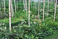 Birch wood with underplanting of shade loving plants - Mirrored garden, Illusion of forest - Conceptual Garden 'Forest2' - RHS Hampton Court Flower Show 2008