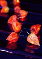 Physalis - Chinese Lanterns attached to fairy lights