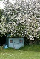 Crab apple in blossom by child's play house in early May
