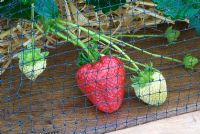 Strawberries growing under netting in raised wooden beds - RHS Hampton Court Flower Show