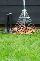Rake, wellingtons and pile of raked autumn leaves on lawn