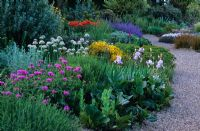The dry Gravel Garden in late spring at Beth Chatto's Garden, Essex. Mixed planting of perennials, bulbs and shrubs including Centaurea, Bergenia, Papaver, Iris, Allium nigrum, Genista and Nepeta