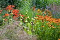Prairie planting including Phlomis russeliana, Crocosmias and Heleniums at Honeybrook House Cottage, Worcestershire