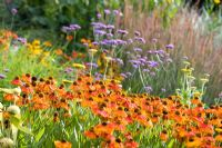 Prairie planting including Heleniums at Honeybrook House Cottage, Worcestershire